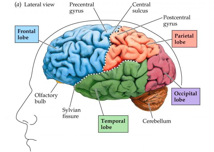 Internet Is Changing Our Brain In Different Ways Ava360